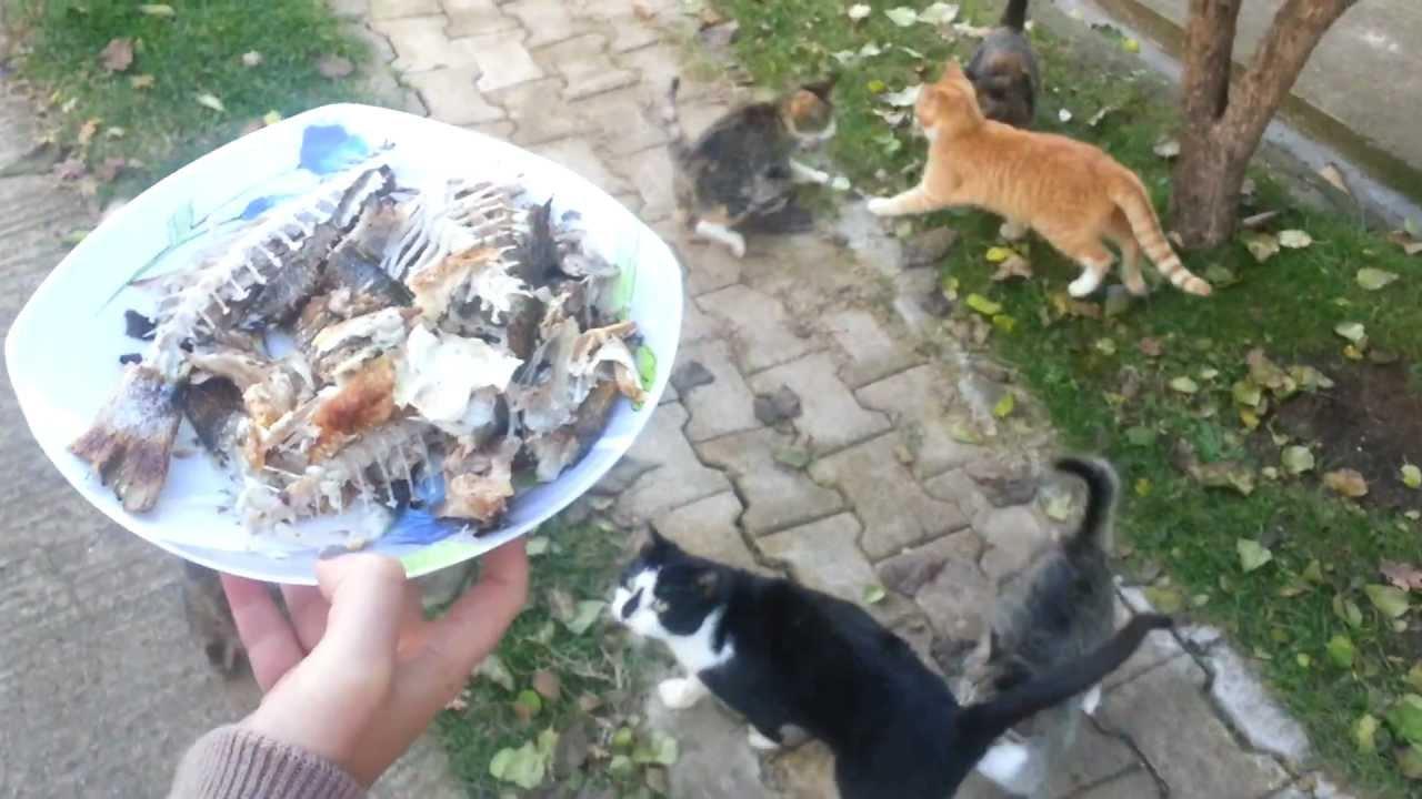 Makanan Kucing Kampung Info Terkini