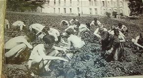 Ramassage des doryphores par des écoliers, vers 1940 (Mémorial de Caen)