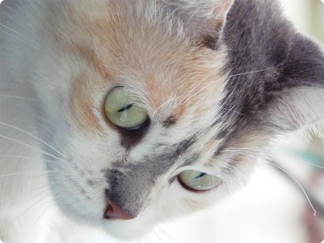 gatinho, gato fofo, gato com instagram, gato blog, gato vitalata, adotar um gato