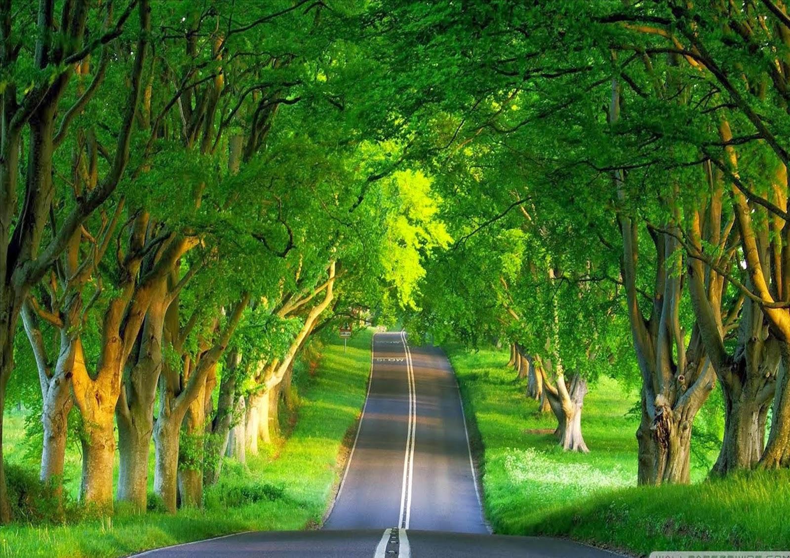 indian tourism india s 10 beautiful natural place rh tourhindian blogspot com