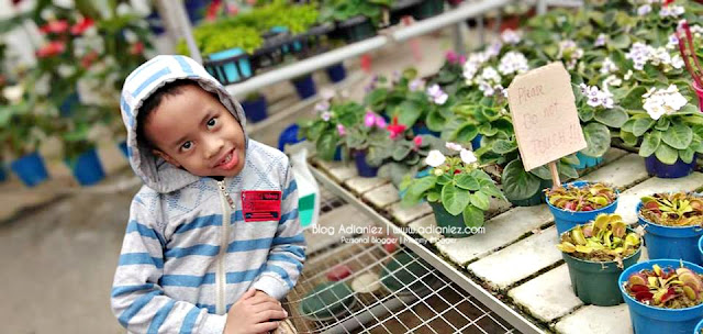 Holiday Cameron Highlands | Taman Agro Tourism Big Red Strawberry Farm & Cactus Valley