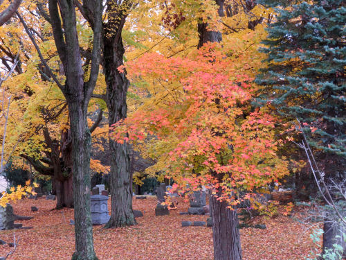 autumn color in a cemetery