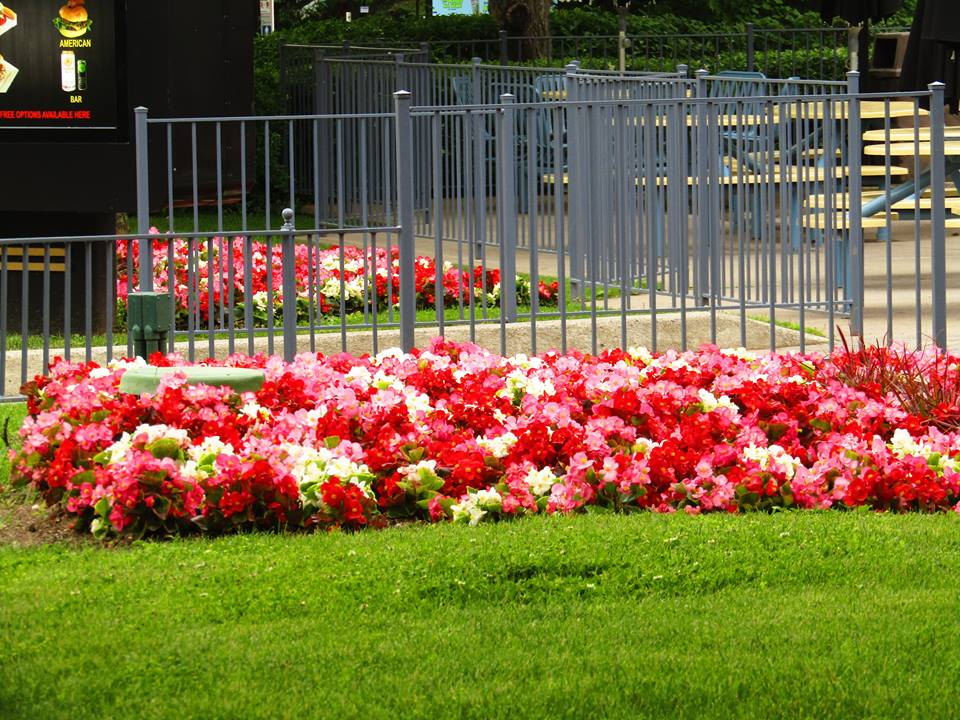 Red and white coloured flowers in front of Backlot Cafe.