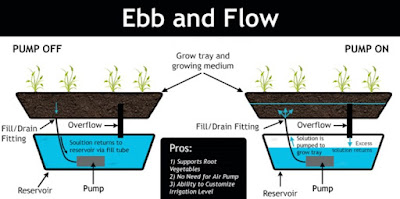 How to Plant Hydroponics Tidal System (Ebb and Flow / Flood and Drain)