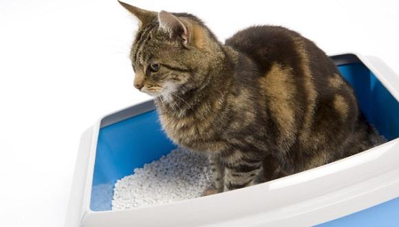 Penyebab dan Cara Mengatasi Kucing Mencret atau Diare