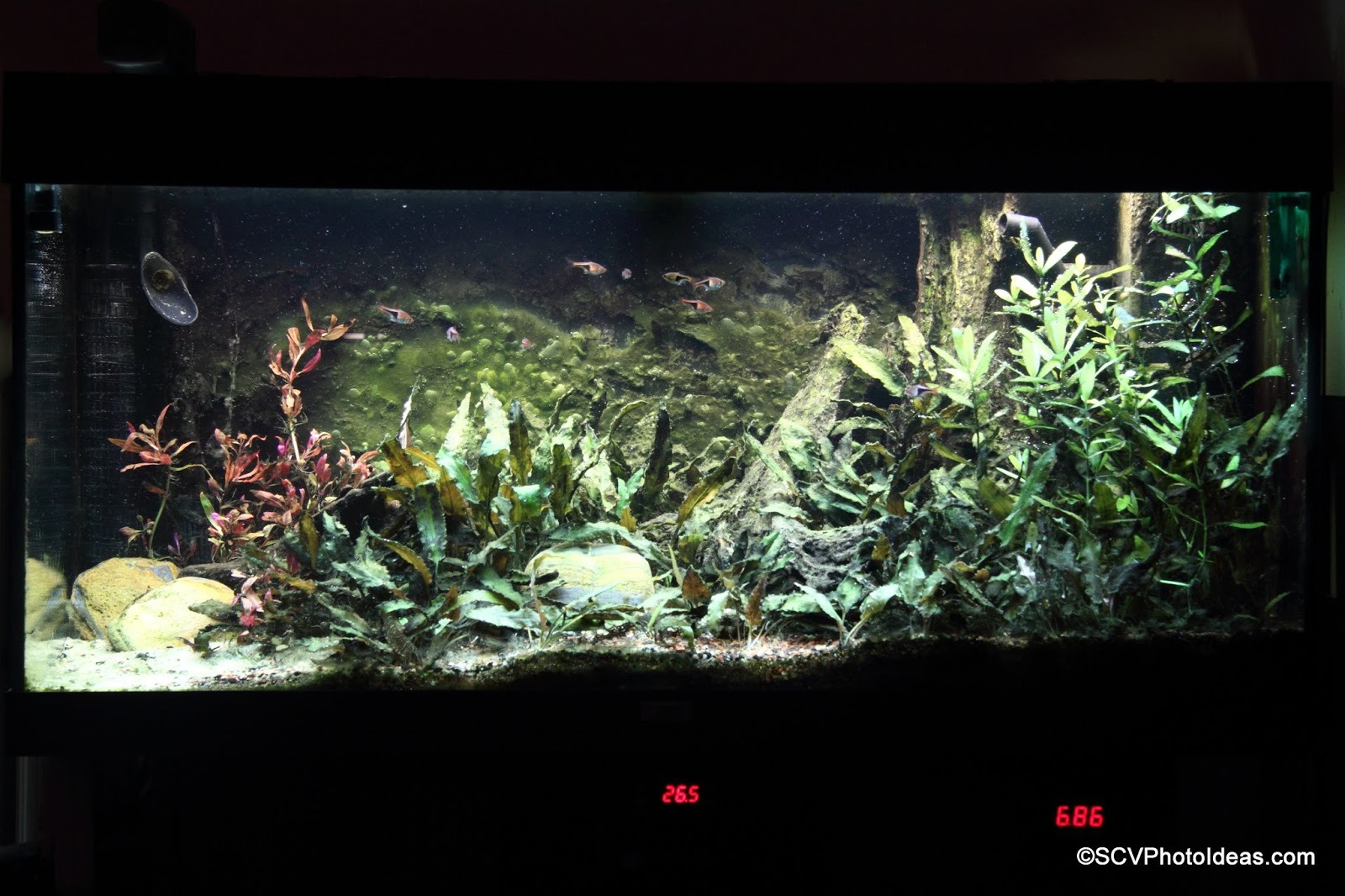 Scv Aquascaping Ideas External Filter Aquascape South East Asia Biotope Ii Juwel Rio 180 Part V