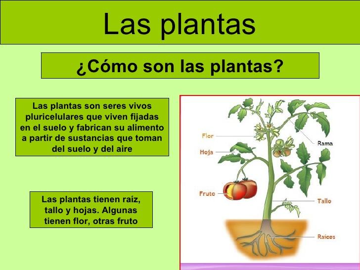 Clase ra l las plantas clasificaci n nutrici n for Medio en el que habitan los arboles