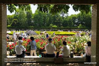 バラ園でくつろぐ人々の写真