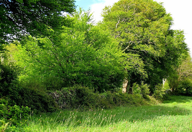countryside image of green trees, grass