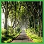 алея в Ирландия