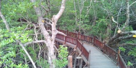 Taman Mangrove Destinasi wisata Baru Yang Menarik di Sukadana KKU