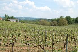 vins de Correze AOP