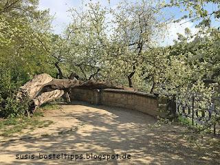 blühender Baum in Pillnitz: Foto von Stampin' Up! Demonstratorin in Coburg