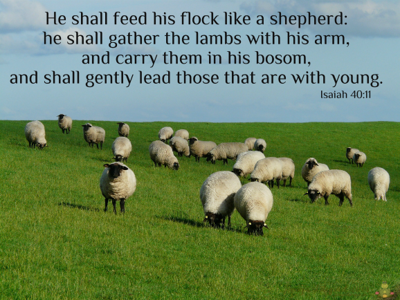He shall feed his flock like a shepherd l frogslilypad.net
