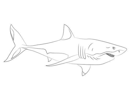 Tranh cho bé tô màu con cá mập nhìn ngang