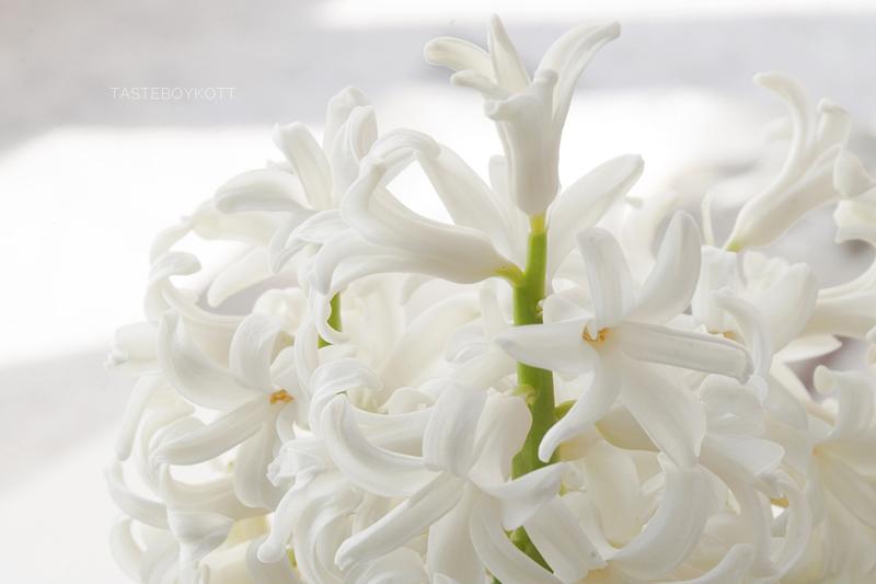 Hyazinthe Frühlingsdeko weiß minimalistisch Tasteboykott