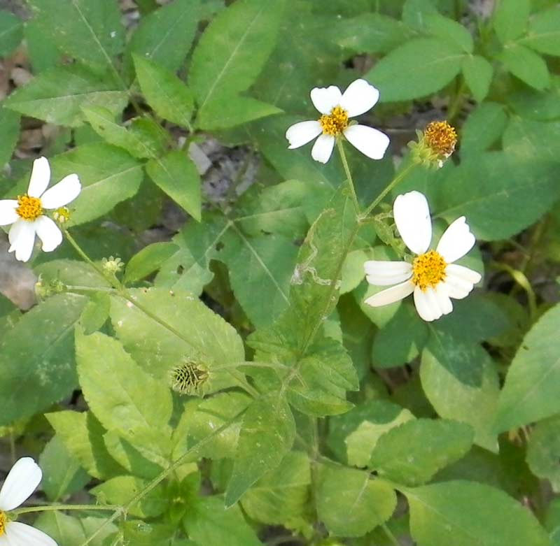 Wild Edible Plants