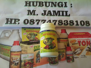 pupuk penyubur tanaman cabe, obat penyubur tanaman cebe, obat cabe, pupuk supernasa untuk cabe, supernasa penyubur cabe