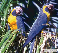 Feed and visit the Tropical birds in the garden
