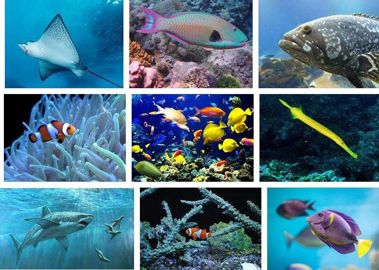 Ikan Laut Konsumsi dan Ikan Laut Hias
