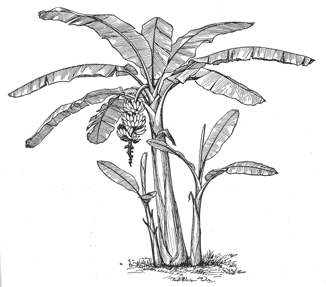 Botany Professor The Symmetry Of Plants