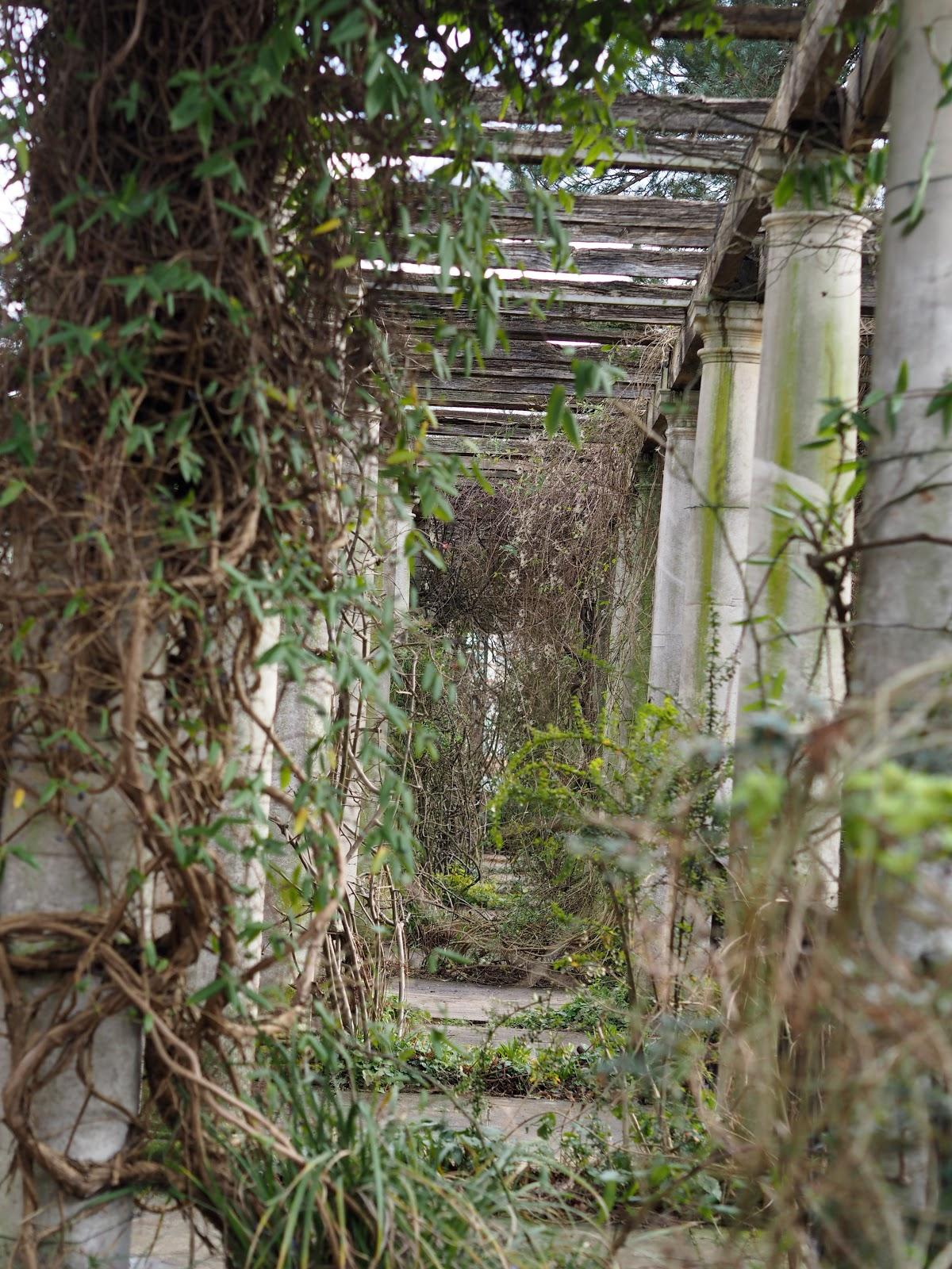 Vines wrapped around pillars on Hampstead Heath.