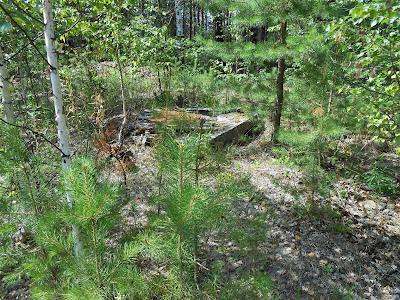 Бетонный колодец в лесу