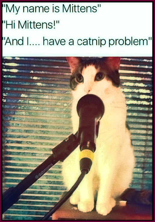 """My name is Mittens"" ""Hi Mittens!"" ""And I..."" pauses in shame ""sigh... have a catnip problem..."" tears well up and begin to flow... #funny #meme #cat #catnip"