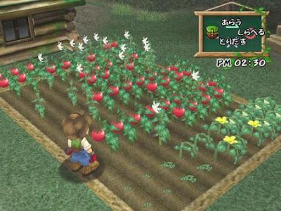 Cheat Harvest Moon A Wonderful Life PCSX2