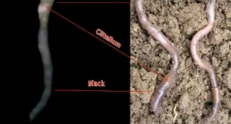 worm or snakes on mars