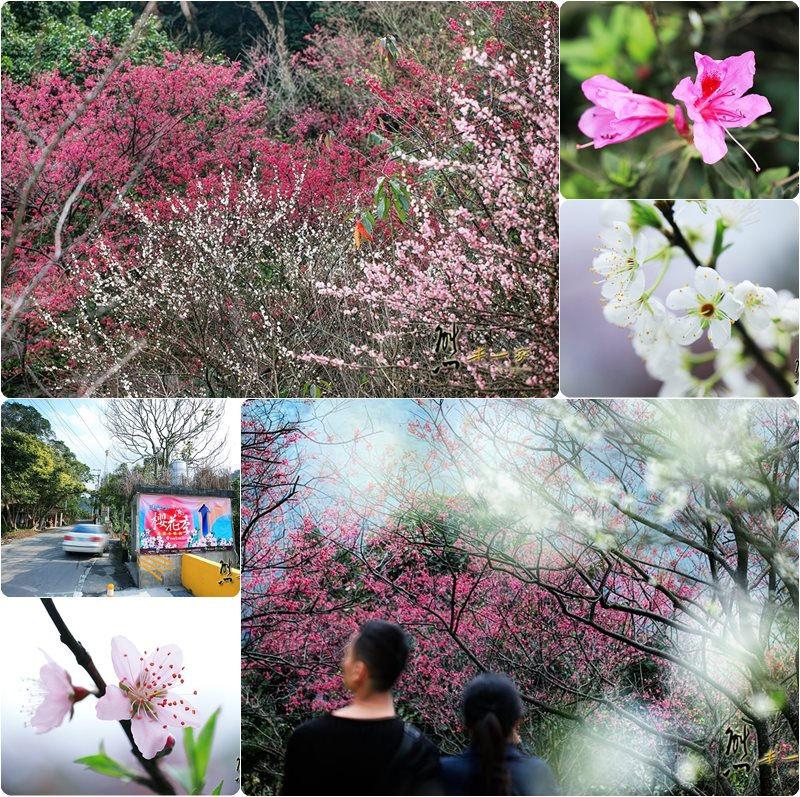 天上人間建安131櫻花園