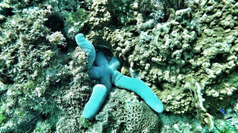 小琉球浮潛秘境|美人洞沙灘|美人洞花瓶岩浮潛看海龜|綠蠵龜石|寶娜娜民宿自由潛隊