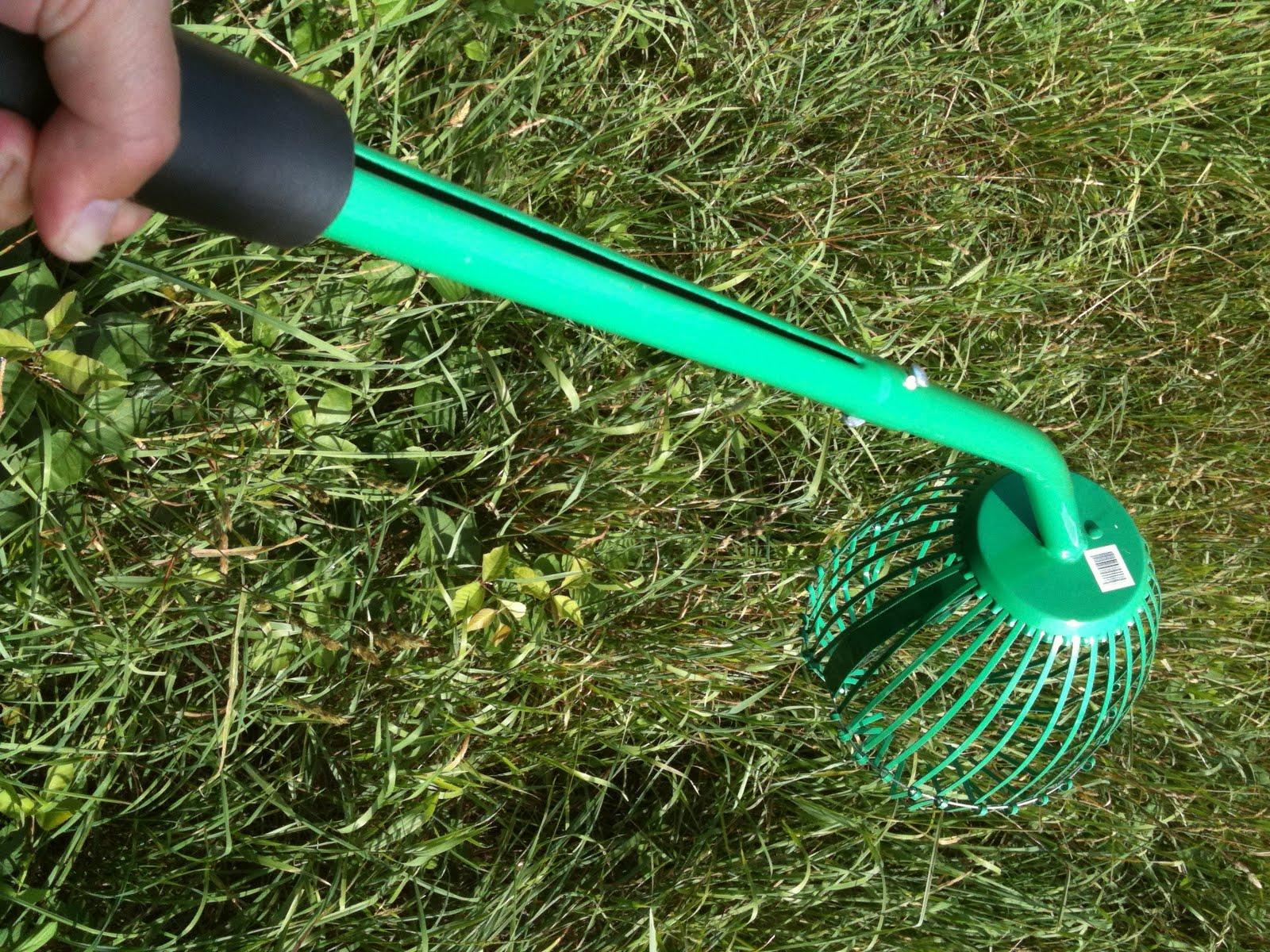 Best Way Clean Leaves Large Yard