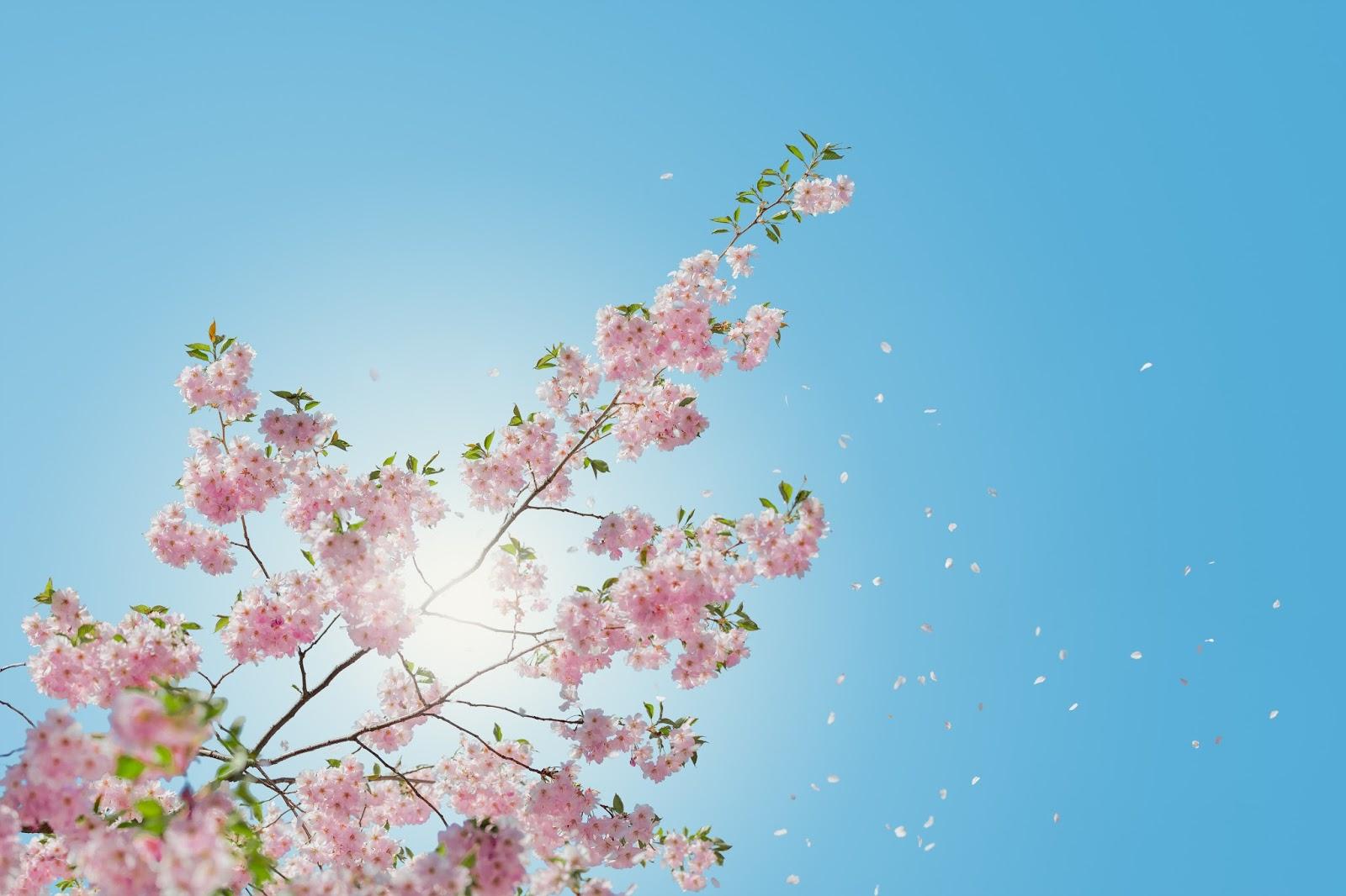 Wiosna, czyli życie cudem jest...
