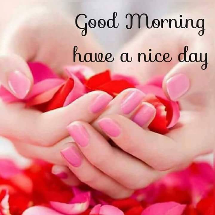 Whatsapp Good Morning Love Images: Images For WhatsApp: Good Morning Wishes Images Whatsapp