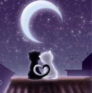 kitty-love-dp