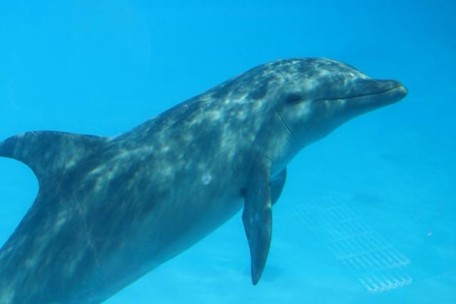 Selwo Marina Benalmadena, precios y horarios para visitar los delfines