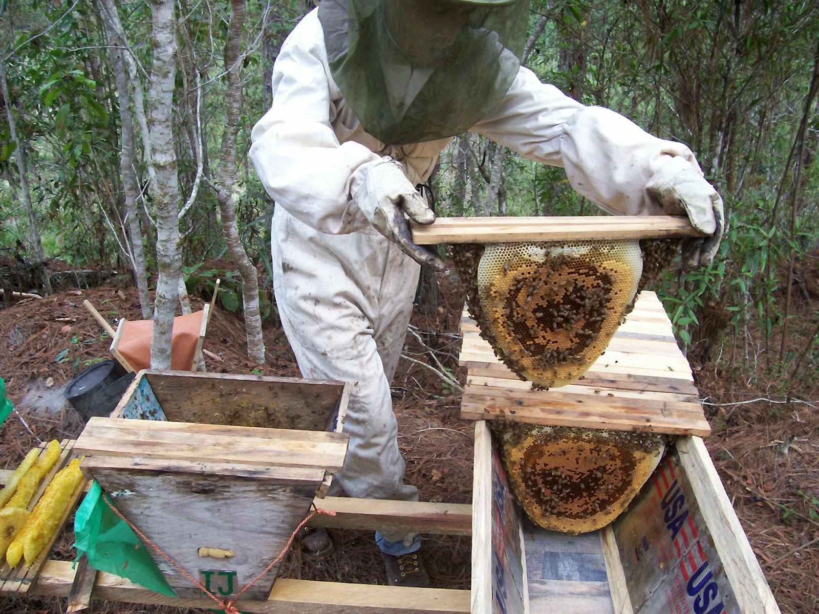 Musings On Beekeeping About Swarms And Trap Hives Getting Free Bees