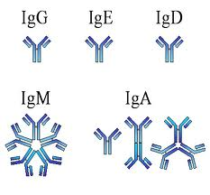 jenis antibodi