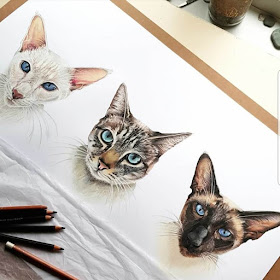 07-Cats-Tom-Strutton-Animal-Drawings-www-designstack-co