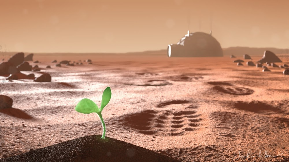 First plant on Mars by Samuel van der Hoeven