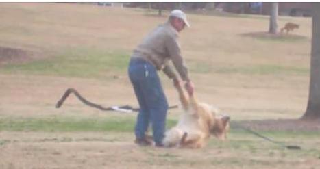 Ce chien est tellement feignant qu'il fait le mort pour rester au parc. La vidéo m'a fait mourir de rire!