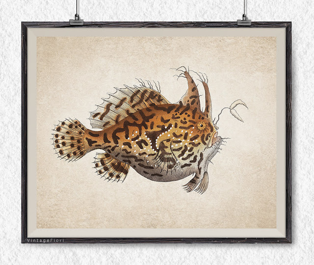 Deep sea fish print nautical art - Etsy