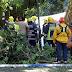 MADEIRA - Vídeo amador capta momento da queda de árvore sobre multidão