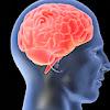 Cara Mengasah Kecerdasan Otak dengan Kebiasaan