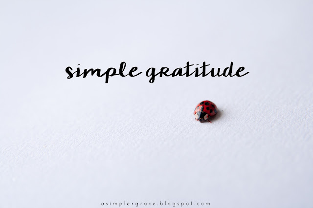 A weekly recap of my gratitude and linking up for #gratefulheart Monday with Ember Grey!