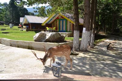 Parco Nazionale Llogora (Albania) - Un'oasi di pace e tranquillità