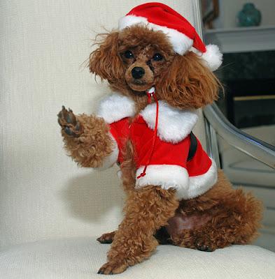 photo d'un chien original pour noel