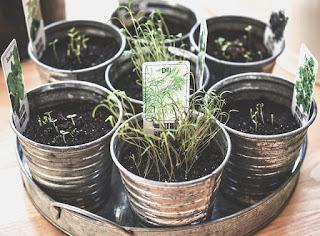 idées de cadeau pour la fête des mères petits pots de plantes aromatiques