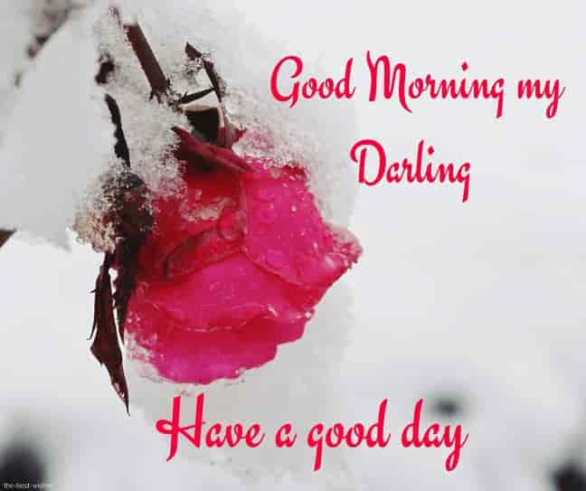 good morning my darling have a good day